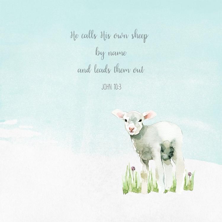 Sheep_Name