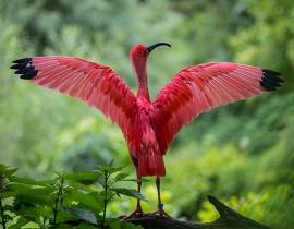 bird_spread_wings