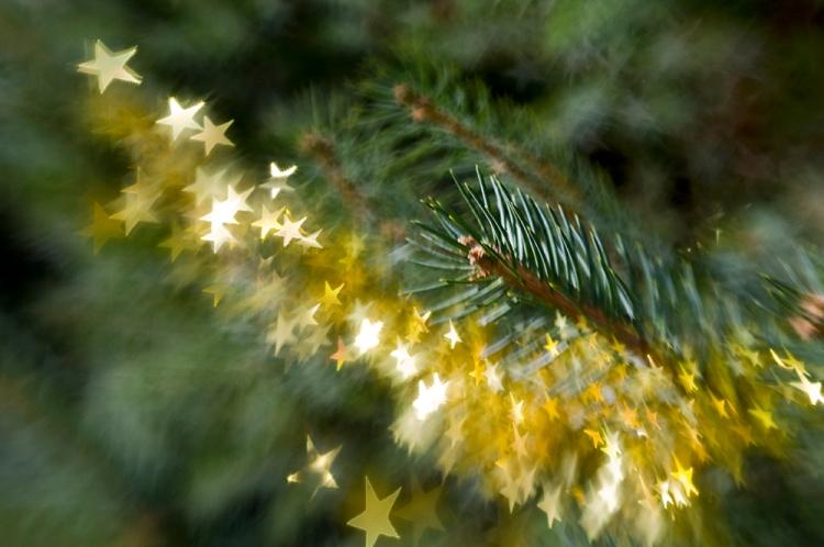 spruce_stars