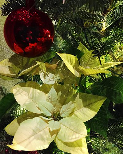 IMG_8022_Christmas