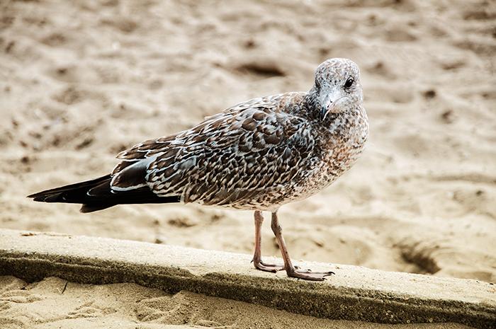 Sand_Bird