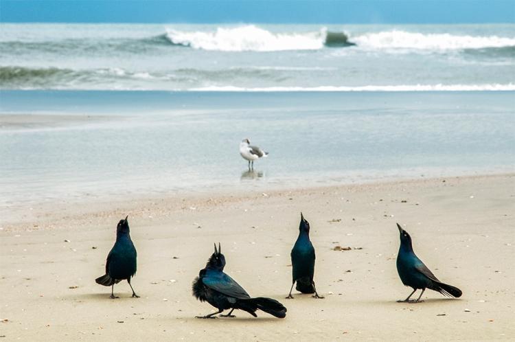 _DSC0528_Beach_Birds