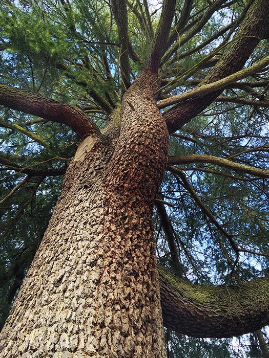 IMG_1418_Tree