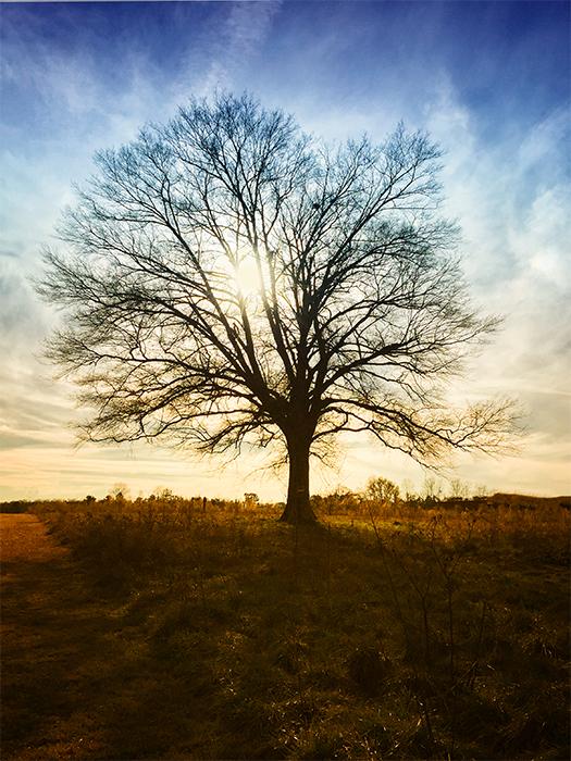 IMG_1470_Tree_Sunset