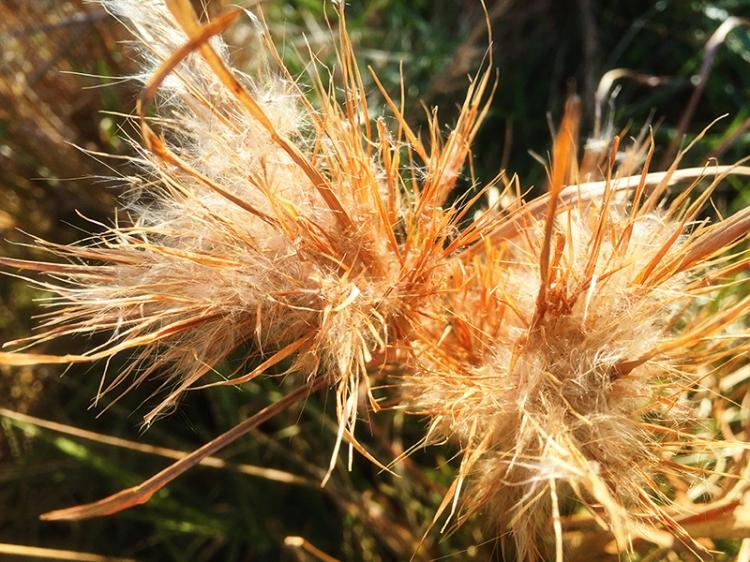 IMG_1481_Weeds